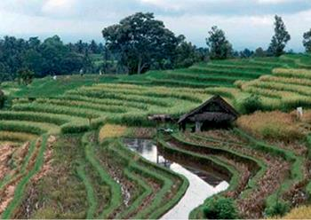 Bali Irrigation Development - Indonesia: 190.000 ha